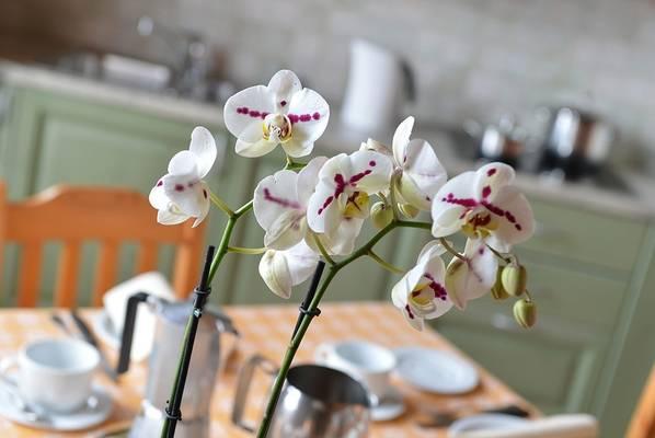 03-rododendro-appartamento-livigno-c-980x656-3
